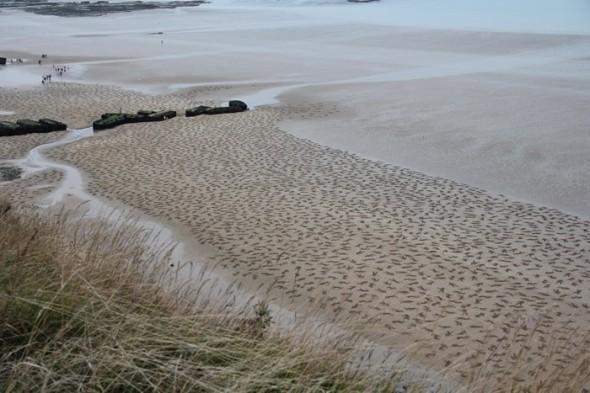 D Day, Normandy Beach